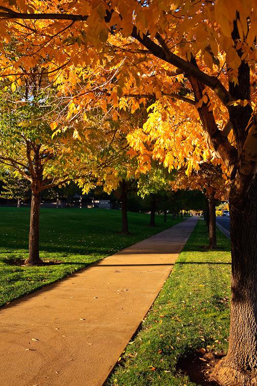Fall colors #1