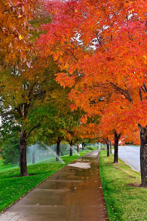 Fall colors #6