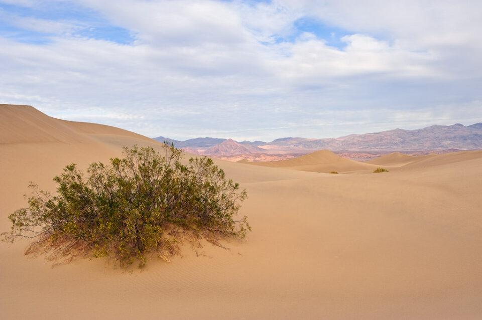 Sand Dunes #1