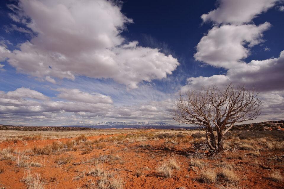 Canyonlands #5