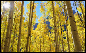 Yellowstone Lake and Aspens: Wallpapers