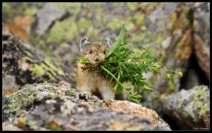 Best of 2010 – Wildlife (Part 1)