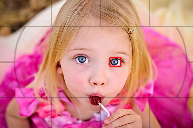 DSLR Cameras cover image