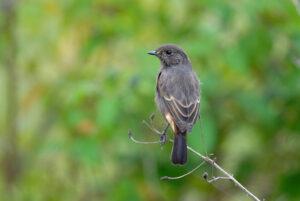Case Study: Bird Photography