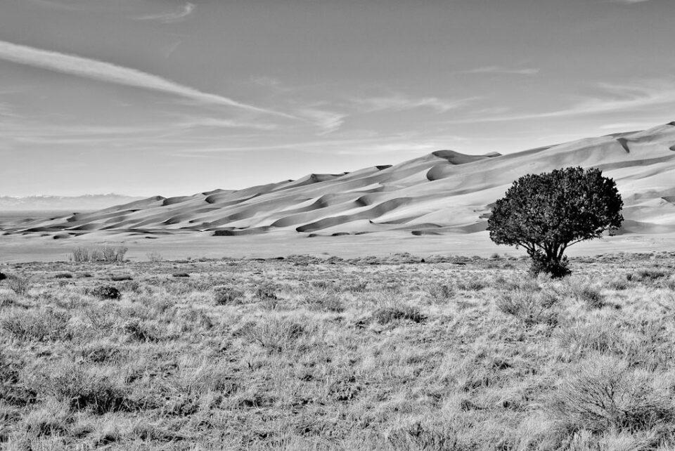 Sand Dunes Tree