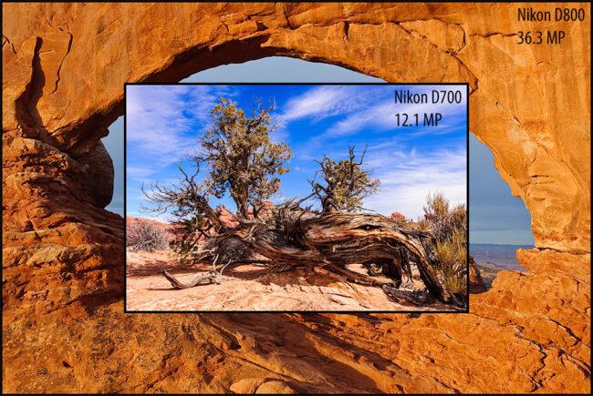 Nikon D700 vs D800 Image Size