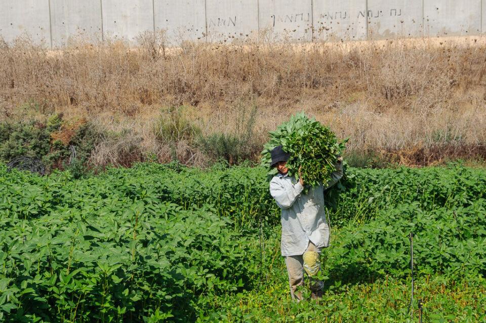 Documenting Palestine in Photographs © Gary Fields 23