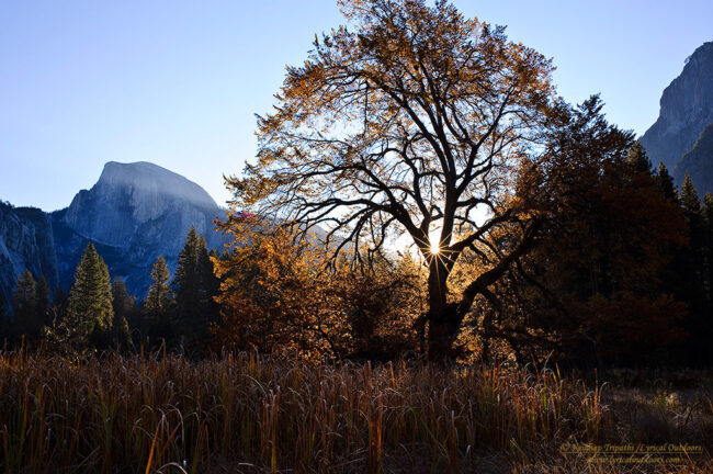 Yosemite in Autumn (12)