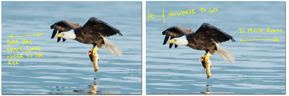 Bald Eagle Sequence