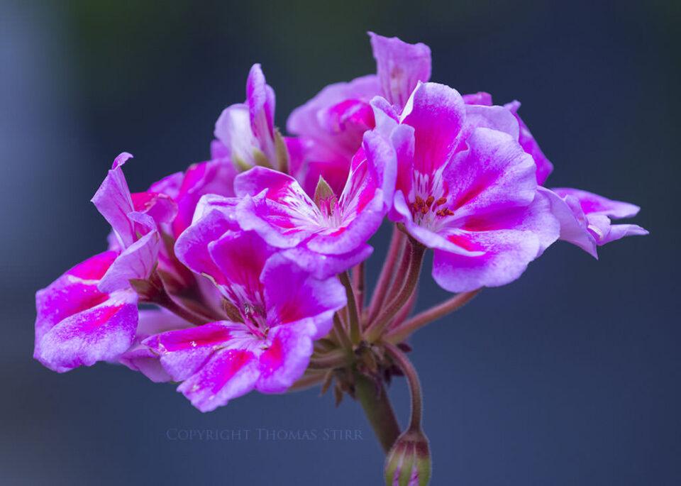 Thomas Stirr Flower Photography (6)
