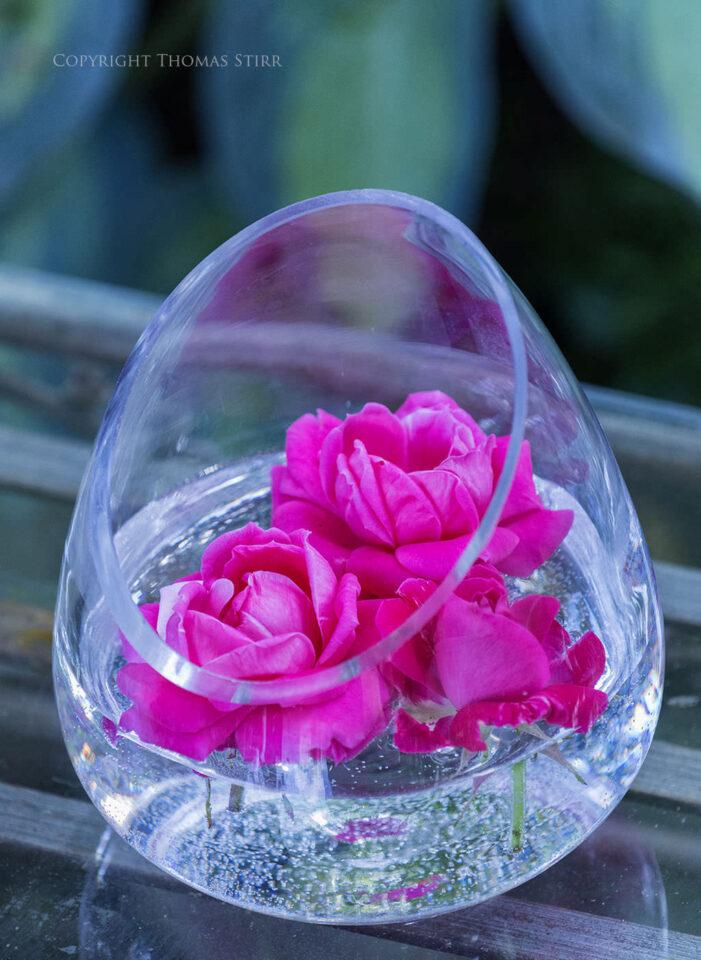 Thomas Stirr Flower Photography (7)