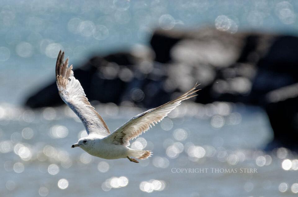 Bird in Flight #5