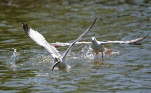 Fish Fight #3