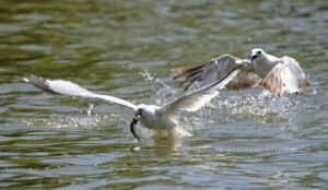 Fish Fight #4