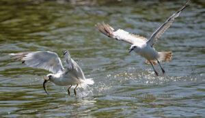 Fish Fight #5