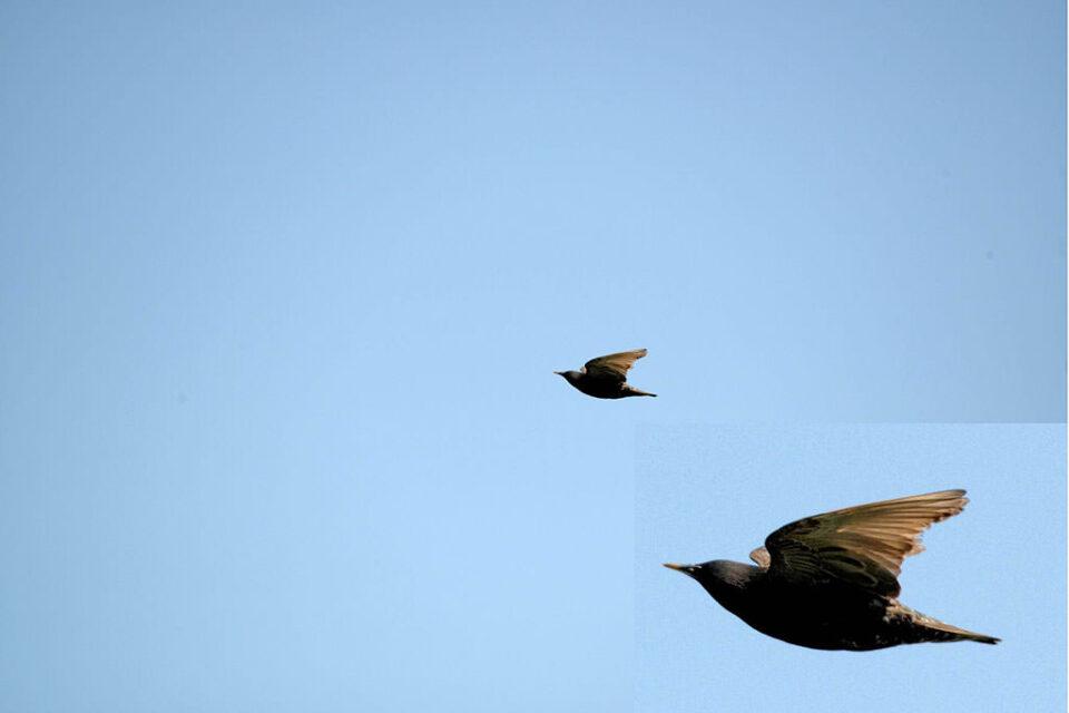 Bird Crop