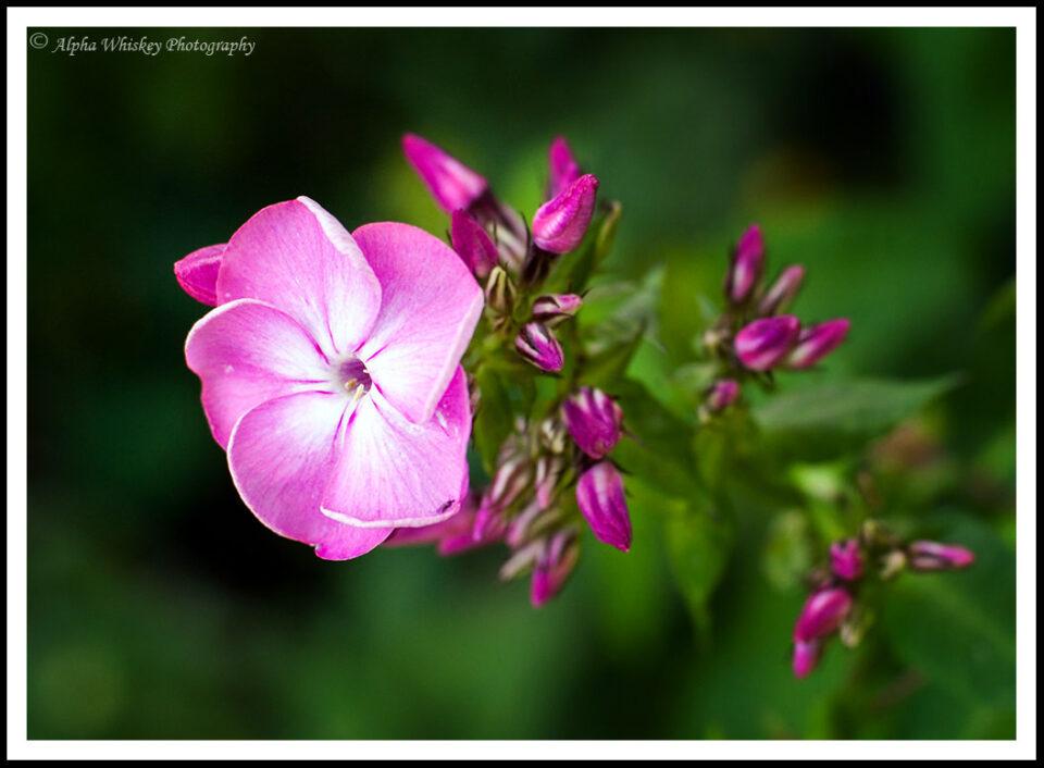 1 Flower St James's Park