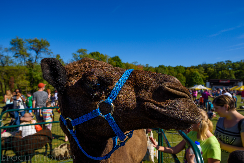 Camel @ f/8