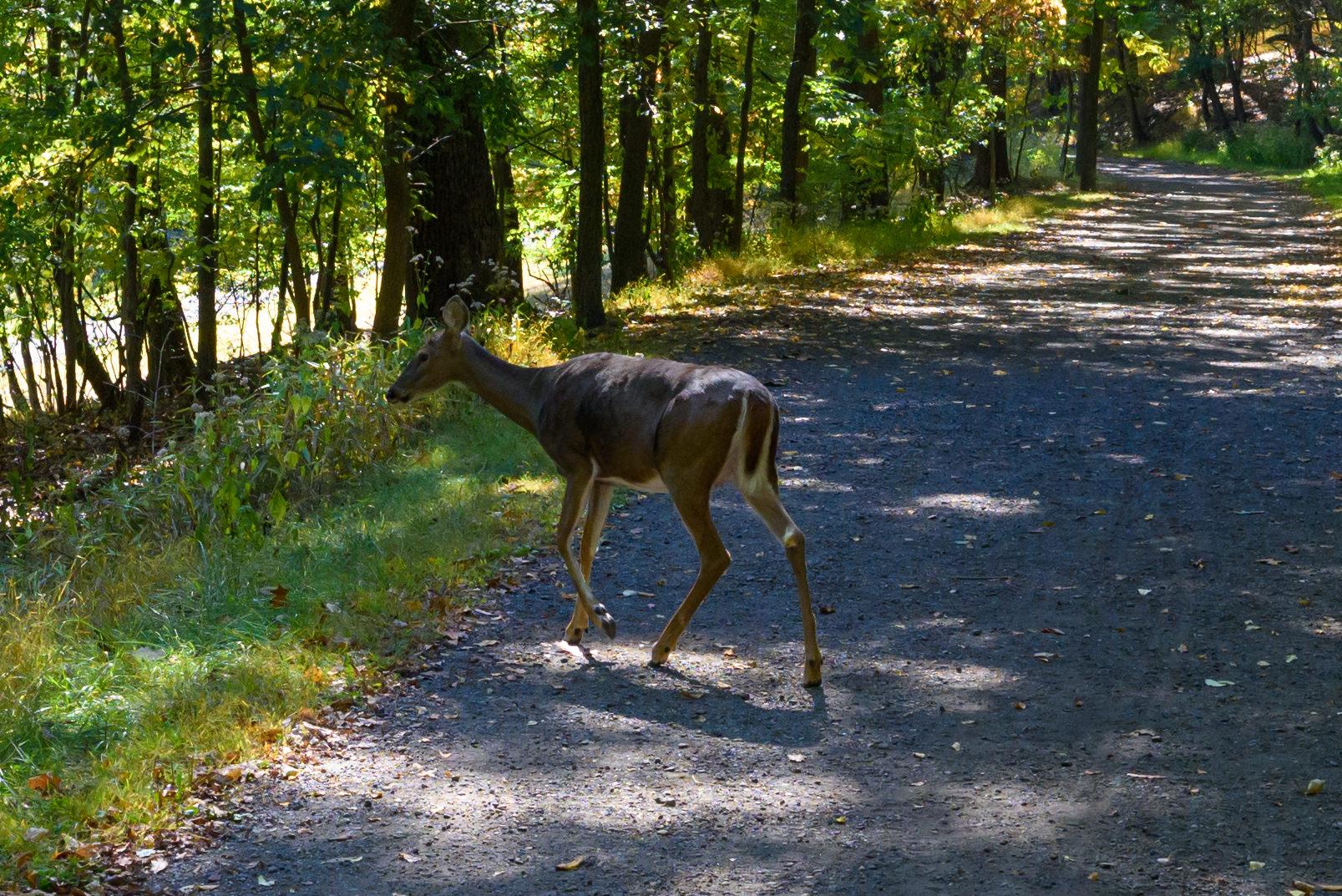 100% Crop of Deer @ f/6.3