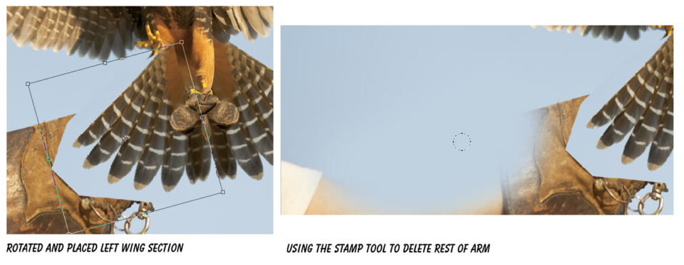 Aplomado Falcon Tutorial Steps 03