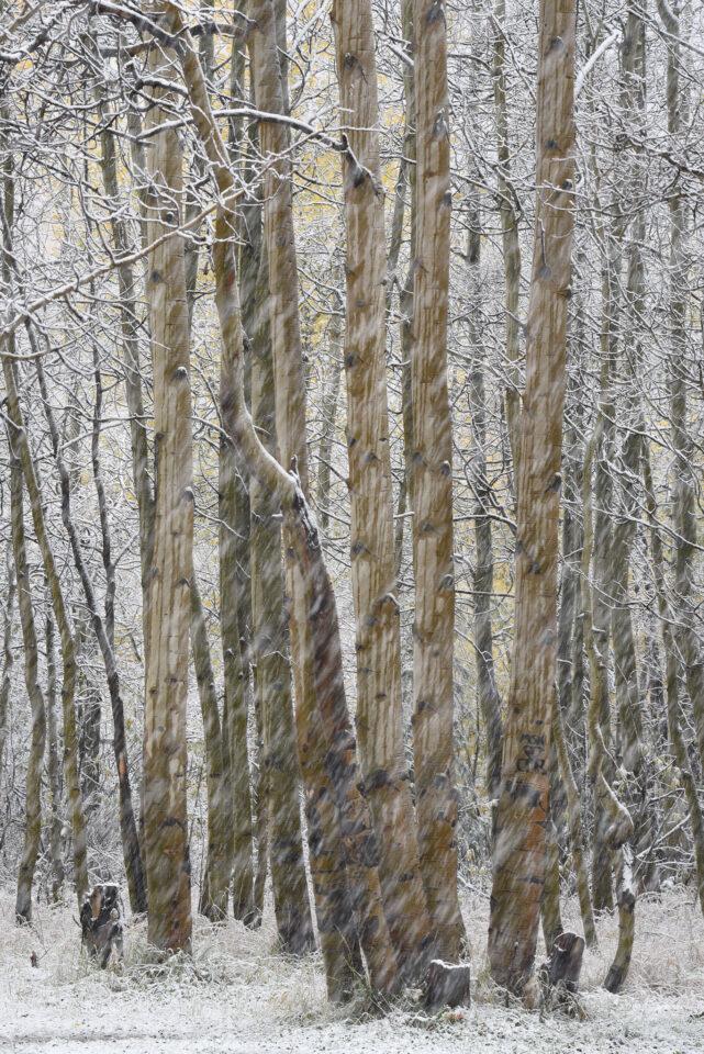 Verm-snow-streaks-San-Juans-1553