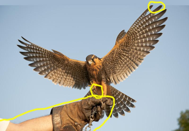 Aplomado Falcon Tutorial Edits Required