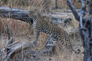 Preparing for a Safari Trip to Africa