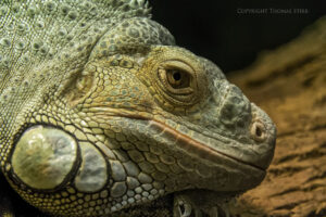 Sample Images with 1 Nikon 10-100mm f/4-5.6