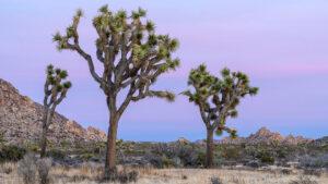 Desert Timelapse in 4K