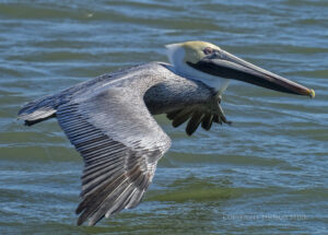 Photographing Birds at Murrells Inlet, South Carolina