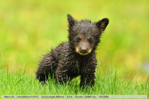 Wildlife Photography Tips – Putting It All Together