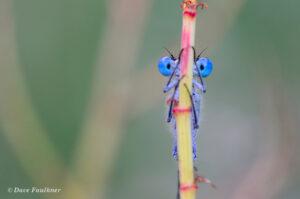 Wildlife Photography at Your Doorstep