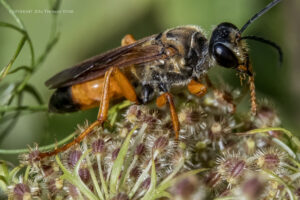 Using Extension Tubes in Strong Wind
