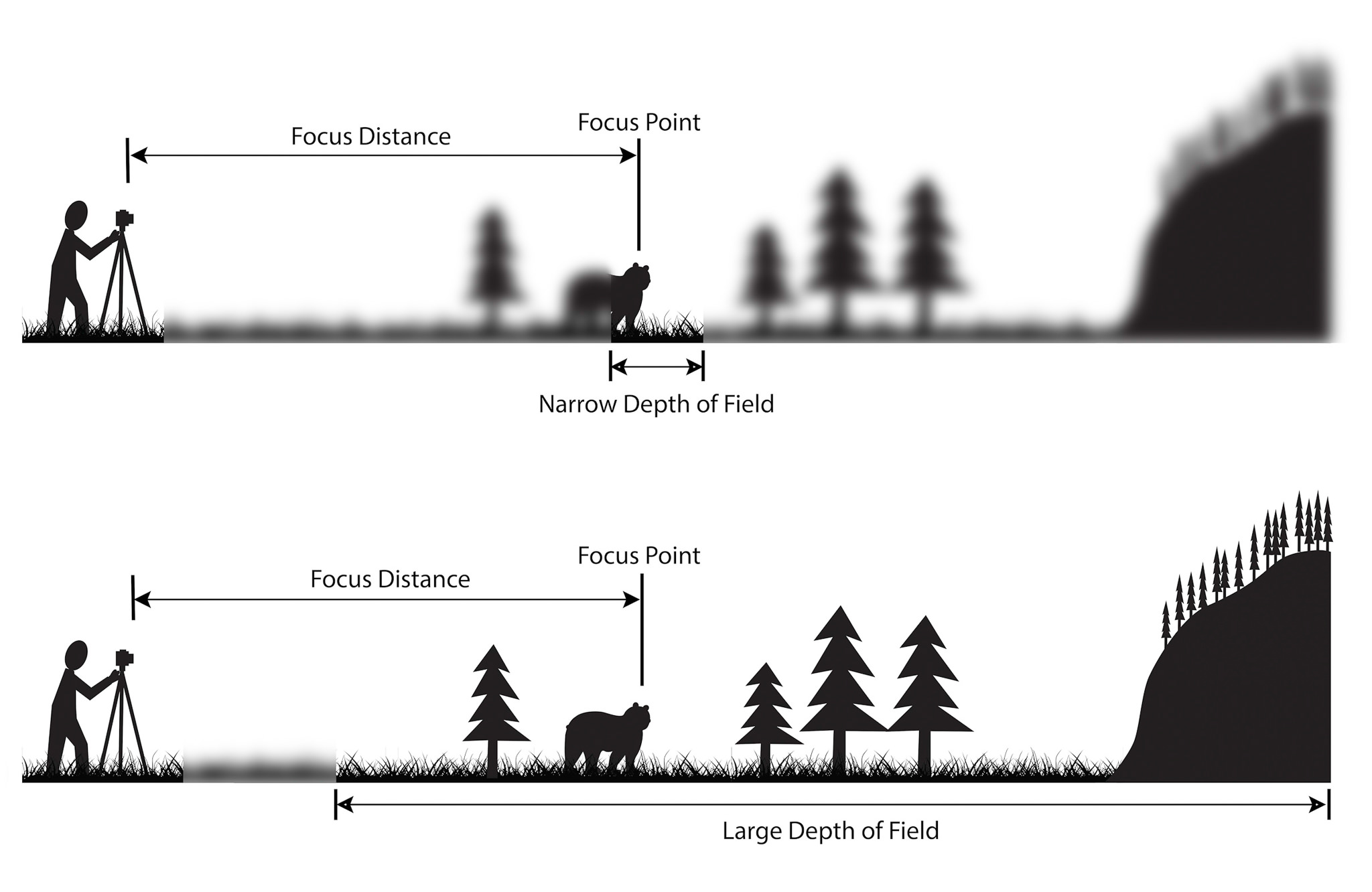 Understanding Depth of Field - A Beginner's Guide