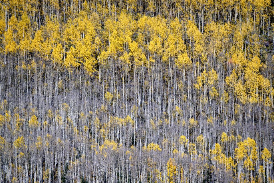 Nikon Z5 Image Sample #11