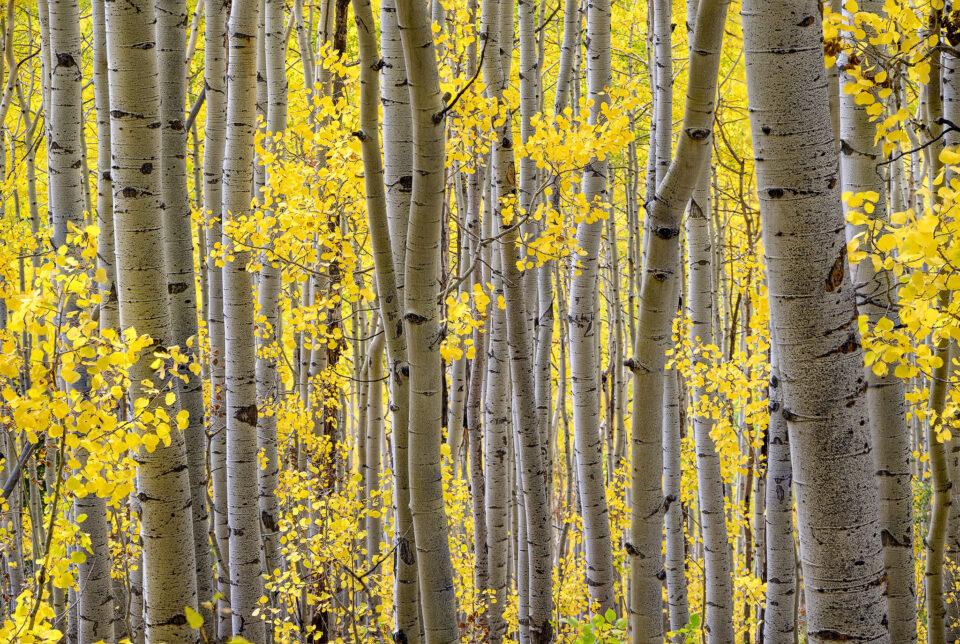 Nikon Z5 Image Sample #21