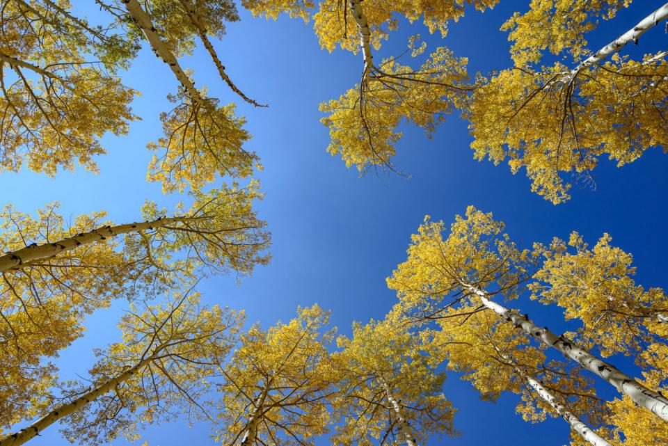 Nikon Z5 Image Sample #33