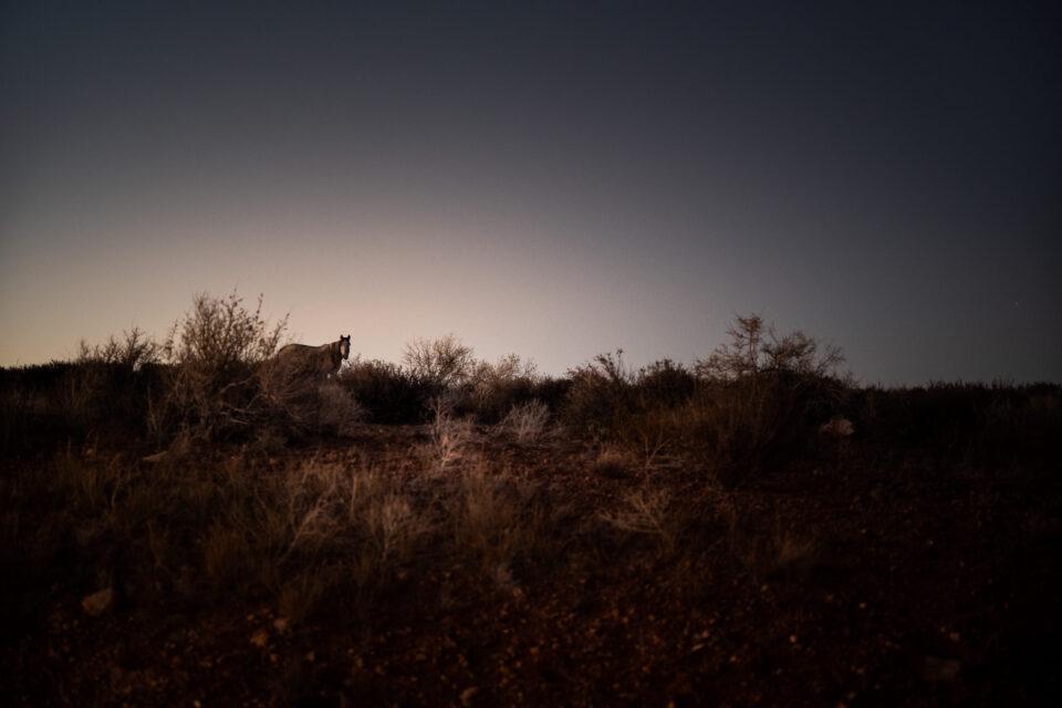 Wild Horse at dusk
