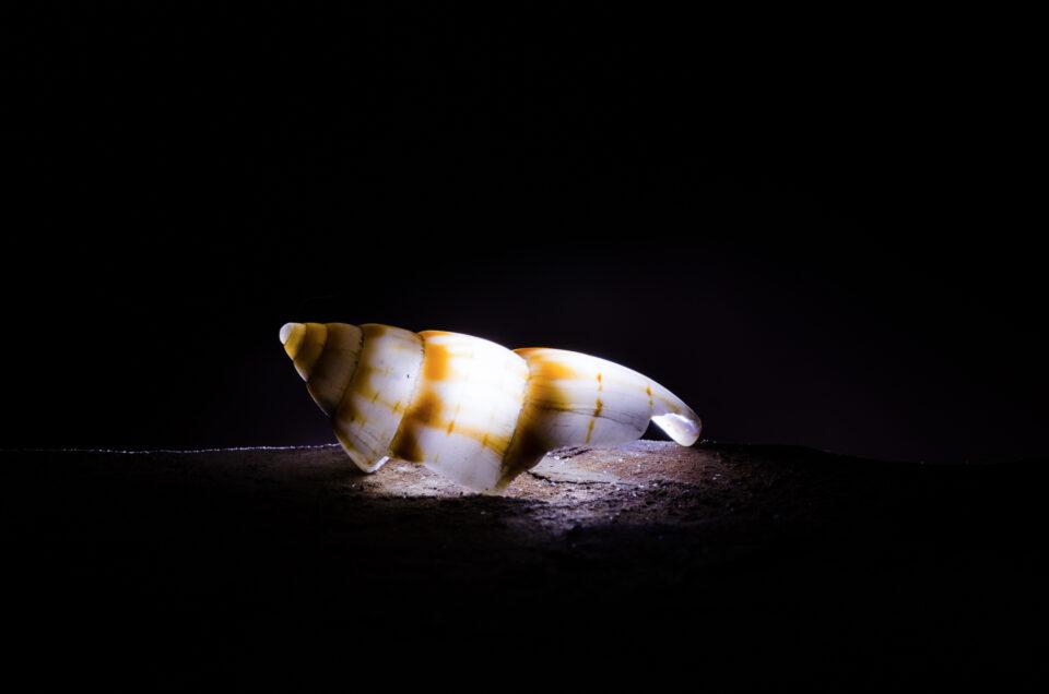 Backlit shell macro photo example