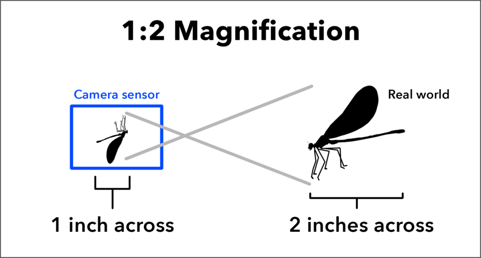Diagram of 1-to-2 Magnification in Photography