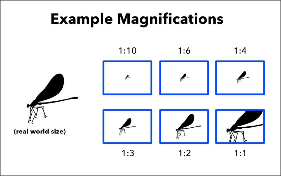 Magnification Examples from 1-to-10 to life sized