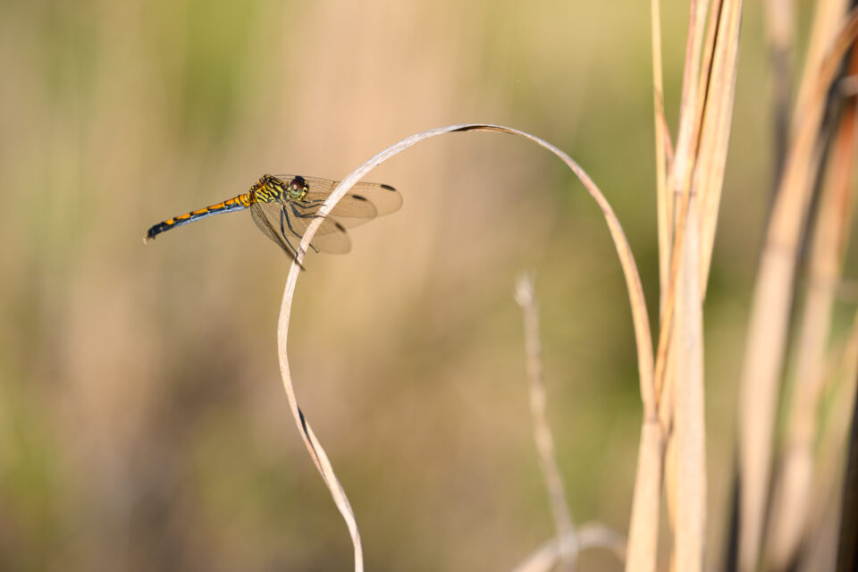 Close-up Photo of Dragonfly on Plant