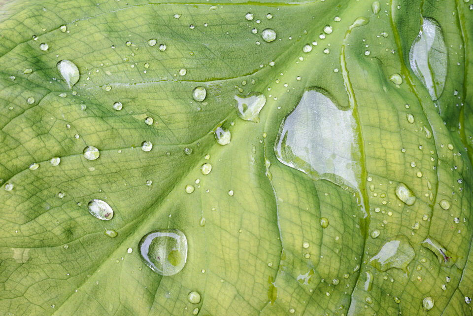Leaf up close with drops of water