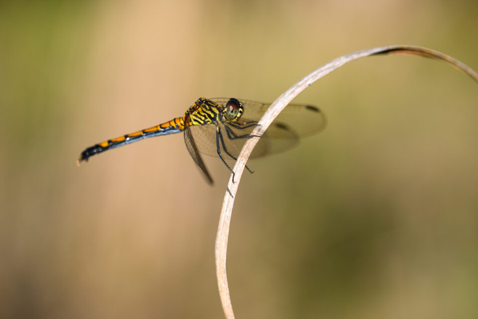 Macro photo of dragonfly with beautiful background texture