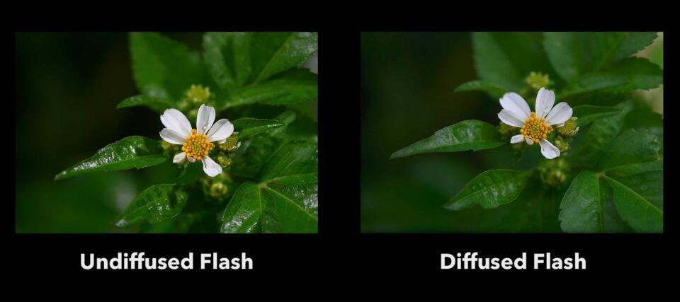 Regular Flash vs Diffused Flash Comparison