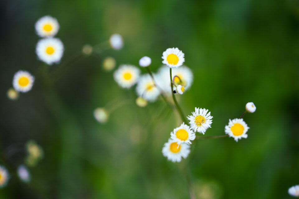 Irix 150mm macro sample photo flowers