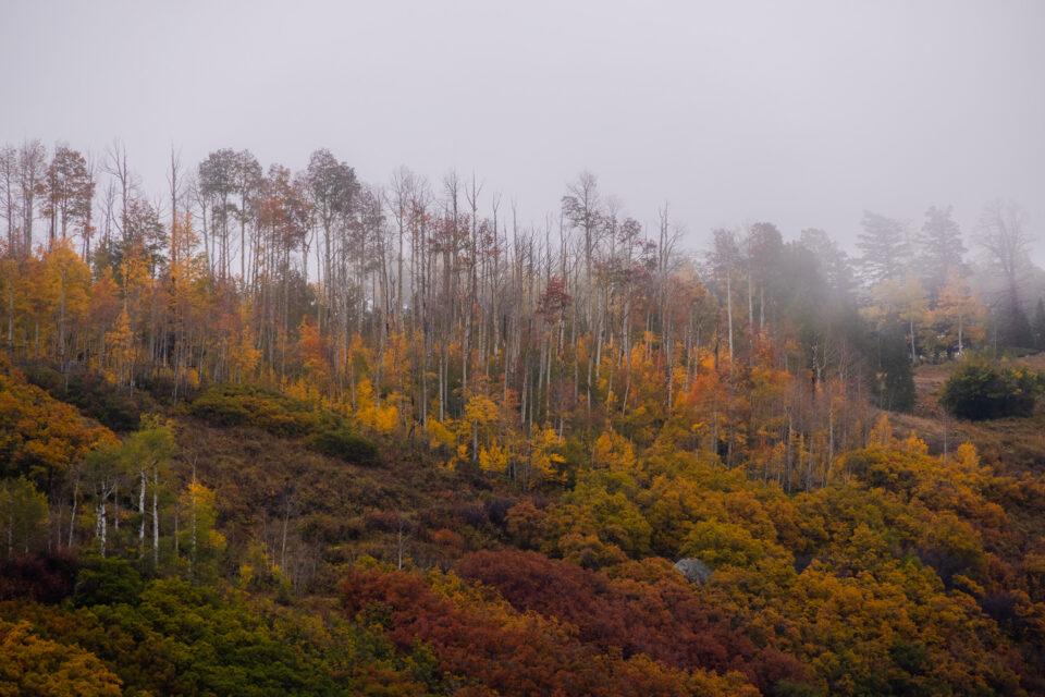 Teleobjetivo Aspen a la niebla 1